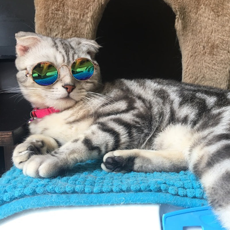 Fashion Small Pet Sunglasses Cat Grooming Accessories