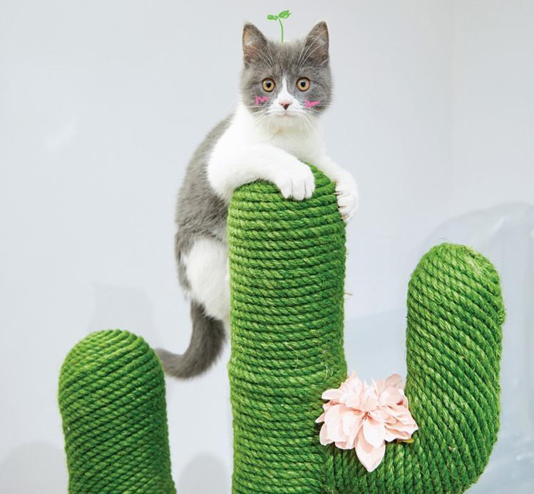 DIY Cute Cactus Cat Climbing Frame And Rope
