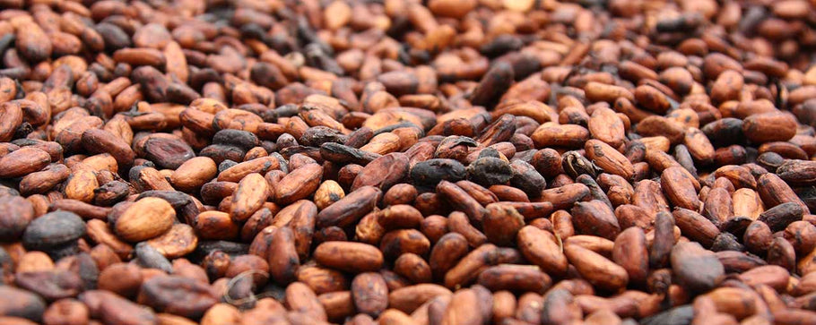 Awesome Brazilian Cacao Beans