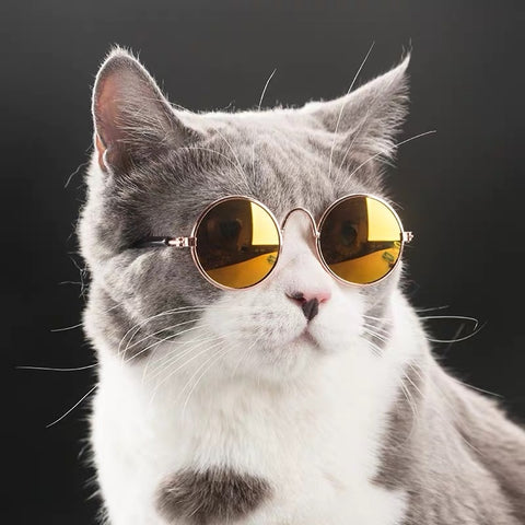 Trendy Pet Cat Small Dog Sunglasses