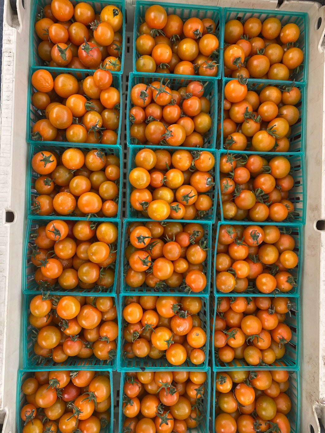 Tomatoes, Sungold (basket)