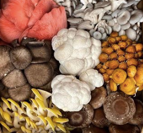 Mushrooms, Seasonal Farm Box (1 lb)