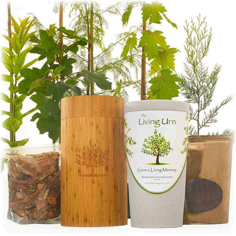 Bamboo Biodegradable Tree Urn for Ashes