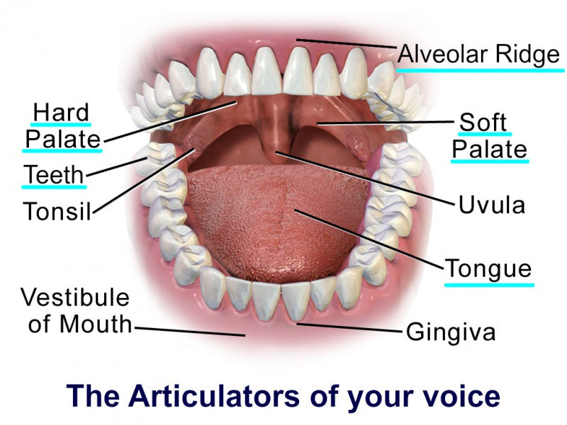 Vibration Resonance in singing voice 2-The Articulators of your voice