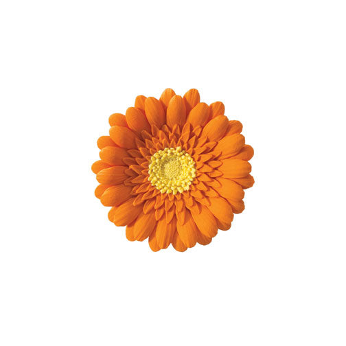 Orange Daisy 3