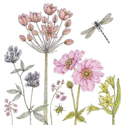 Dragonfly And Musk Mallow Flowers Greetings Card