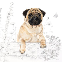 Pug Dog Greetings Card - Pollyanna Pickering
