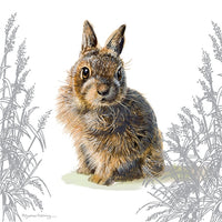 Baby Wild Rabbit Greetings Card - Pollyanna Pickering