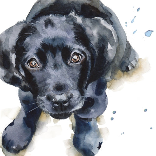 Barney The Black Labrador Puppy Greetings Card - Louise Nisbet