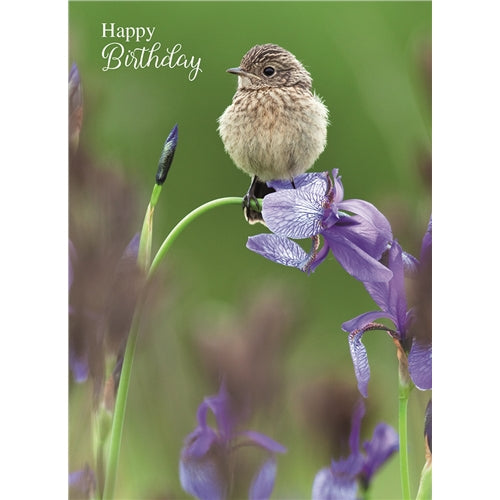 Bird On Iris Flower Happy Birthday Card