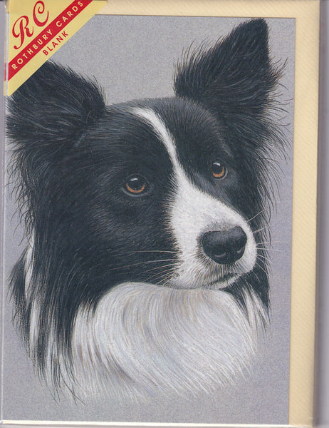 Border Collie Dog Greetings Card - John Wood