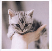 Kitten Handful Greetings Card
