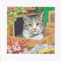 Cat Hide Out Greetings Card - Chrissie Snelling