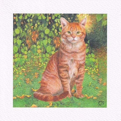 Cat In The Garden Greetings Card - Chrissie Snelling