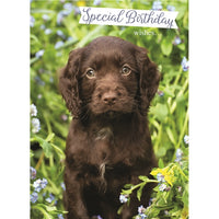 Chocolate Labrador Puppy Birthday Card