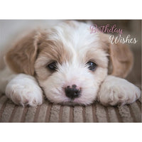 Cute Puppy Dog Birthday Wishes Birthday Card