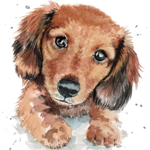 Darcy The Dachshund Puppy Greetings Card - Louise Nisbet