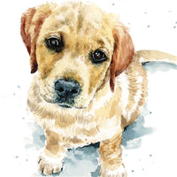 Dougie The Labrador Retriever Puppy Dog Greetings Card - Louise Nisbet