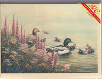Ducks Family Outing Greetings Card - David J. Lawrence