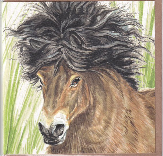 Exmoor Pony Portrait Greetings Card - Sally Anson