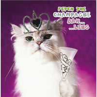 Fetch The Champagne Dah...Ling Cat Birthday Card