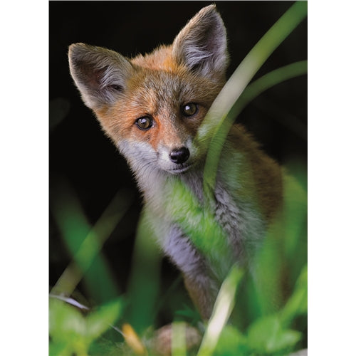 Fox Cub Greetings Card