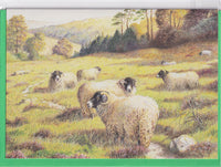 Sheep In A Field Birthday Card - David Blackmore