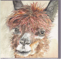 Alpaca Greetings Card - Sarah Boddy