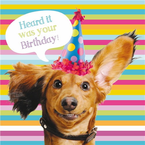Heard It Was Your Birthday! Dachshund Birthday Card