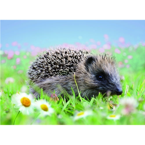 Hedgehog And Daisies Greetings Card