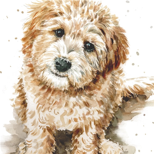Larry The Labradoodle Puppy Dog Greetings Card - Louise Nisbet