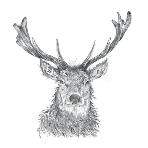 Majestic Stag Pencil Collection Greetings Card - Sarah Boddy