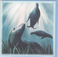 New Zealand Fur Seals Greetings Card - Sally Anson