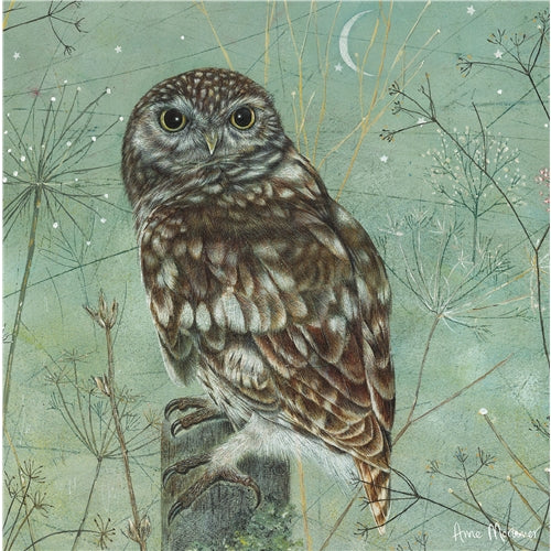 Owl Bird Greetings Card - Anne Mortimer