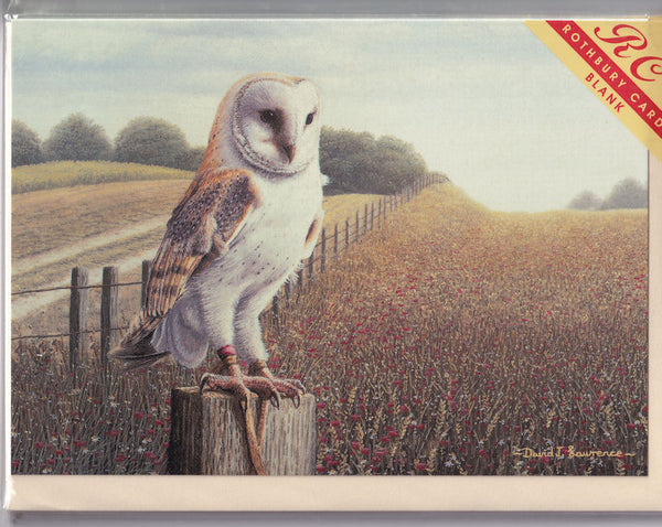 Barn Owl On A Post Greetings Card - David Lawrence