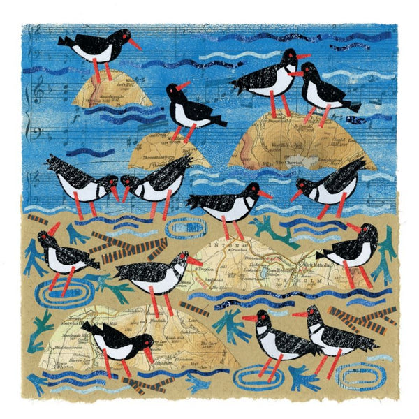 Oystercatcher Birds Greetings Card - Susie Lacome