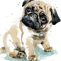 Pixie The Pug Puppy Dog Greetings Card - Louise Nisbet