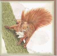 Red Squirrel Greetings Card - Sally Anson