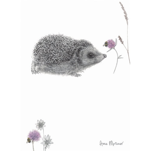 Hedgehog Greetings Card - Anne Mortimer