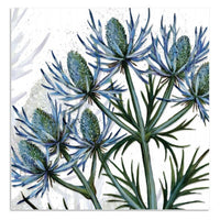 Sea Holly Flowers Greetings Card - Caroline Cleave
