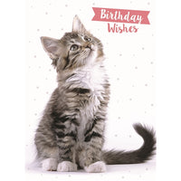Tabby Cat Birthday Card