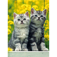 Two Kittens Greetings Card