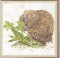 Water Vole Nibbling Greetings Card - Sally Anson