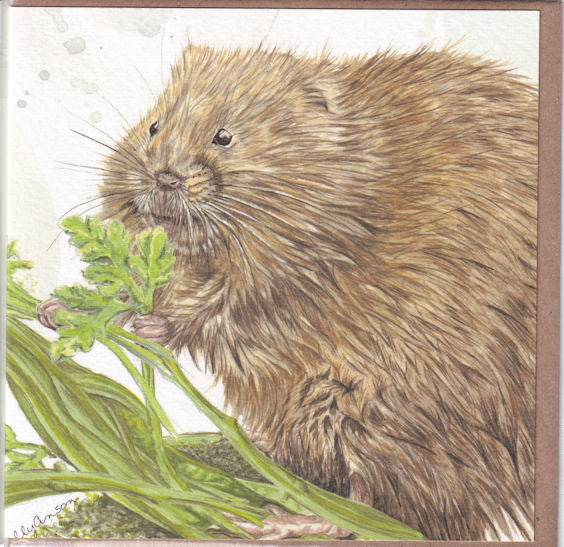 Water Vole Greetings Card - Sally Anson