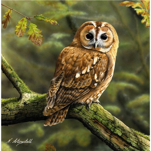 Wise Old Owl Greetings Card - Nigel Artingstall