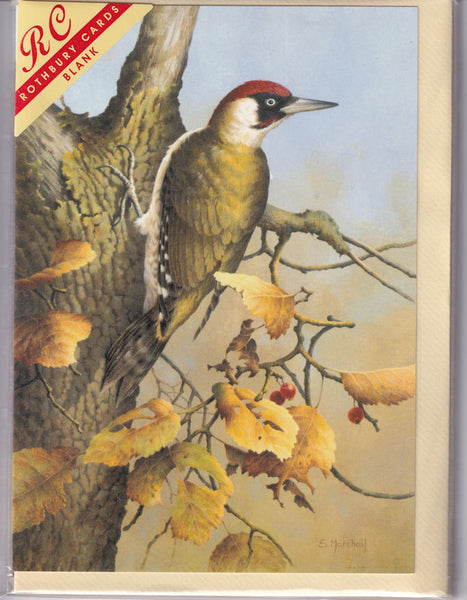 Woodpecker Bird Greetings Card - Sonya Marshall