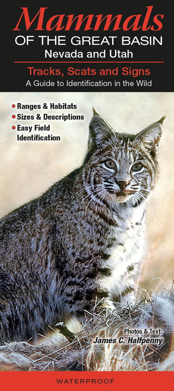 Mammals Of The Great Basin: Nevada & Utah