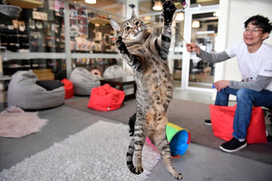 Neko Ngeru Cat Adoption Cafe - Petone