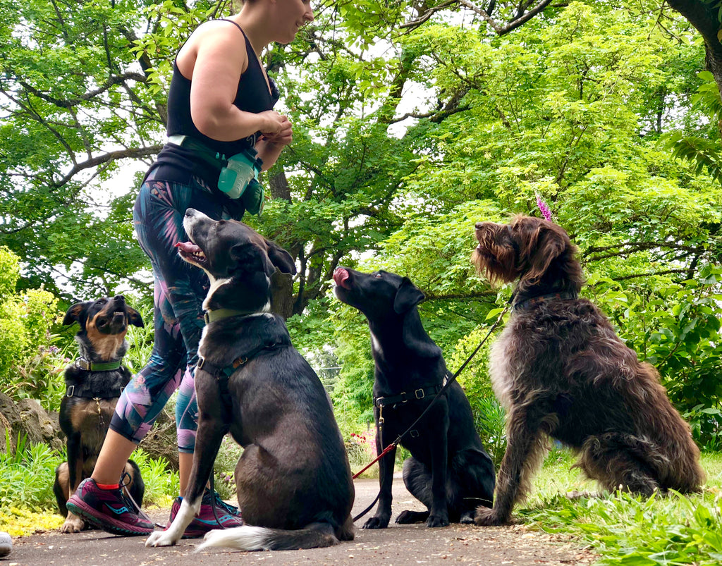 The System is the best multidog leash you will ever use!