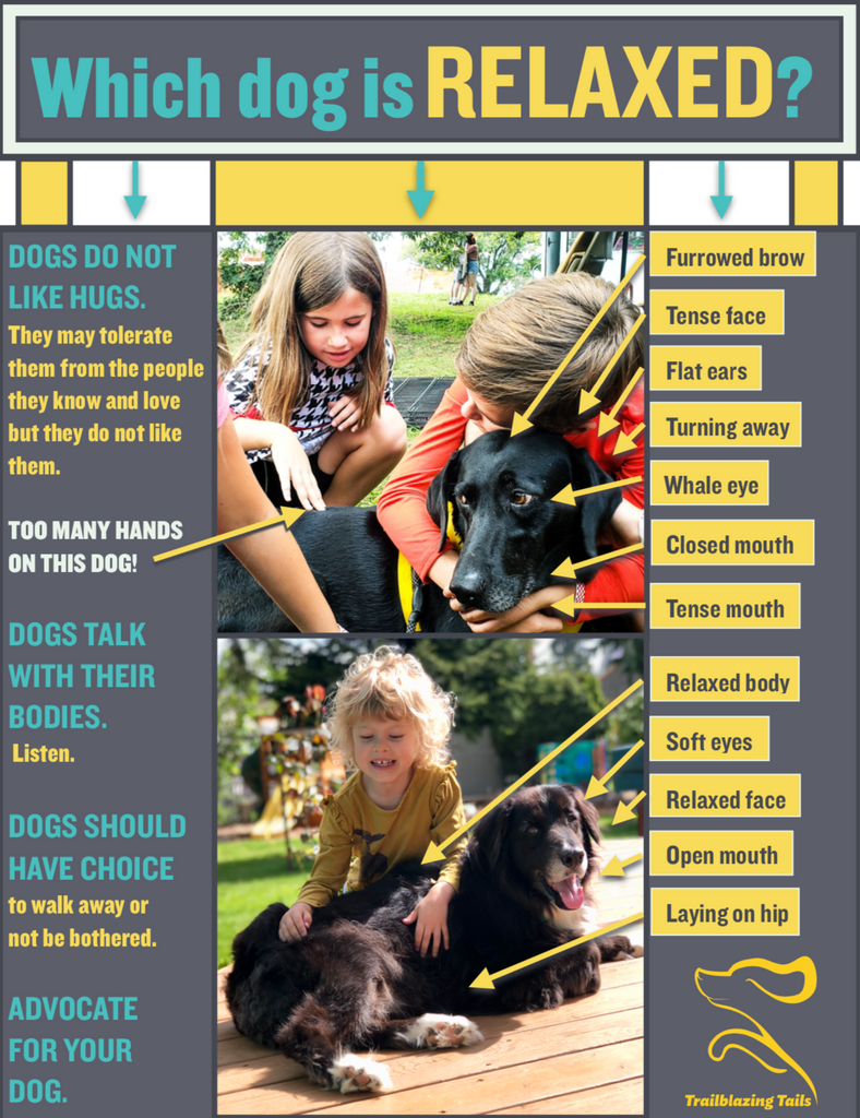 Child and Dog Interaction Guide ©